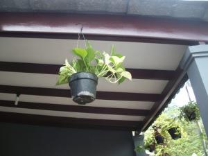 bunga gantung-2